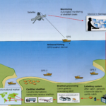 diagram description 6 - labelling shellfish